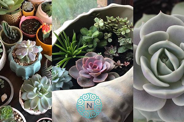 Succulents for Beginners workshop - Nautilus Dublin